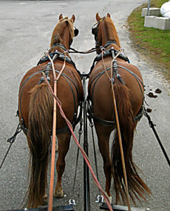 Driving a pair of horses